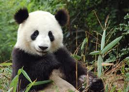 22-daagse familiegroepsreis Het Keizerrijk van de Panda