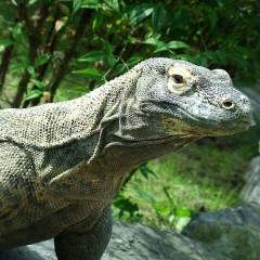 Kleine Sunda Eilanden Familiereis: Langs draken en vulkanen