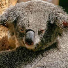 Australie Outback Familiereis: Australie, van Sydney naar Darwin