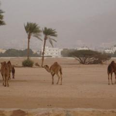 8-daagse familiegroepsrondreis Woestijnsprookjes