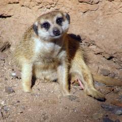 Tanzania Familiereis: Op avontuur door pure Afrikaanse wildernis
