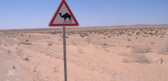 Tunesie Familiereis: Wandelen door Souk en Sahara