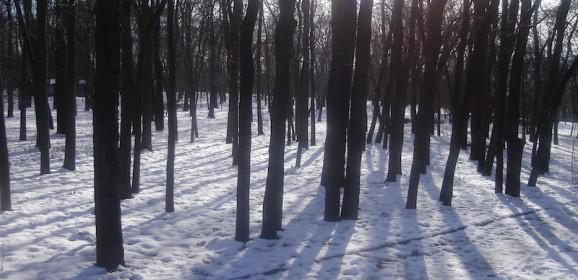 Bulgarije Winter Familiereis: Sneeuwpret in de Rodopi bergen