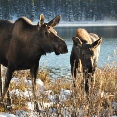 Individuele 19 daagse reis met kinderen in Canada