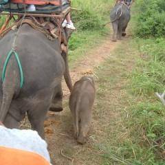 15-daagse familiegroepsrondreis Tempels en Tuk-tuks