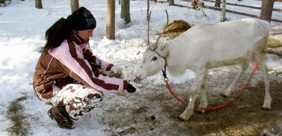 Djoser Junior Lapland: 7 dagen