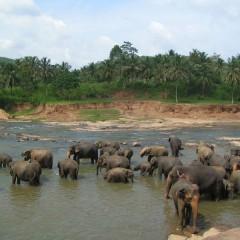 21-daagse familie groepsreis Zoek de Schatten van Sri Lanka