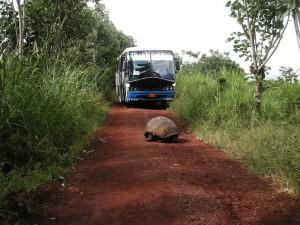 Ecuador Schildpad